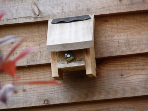 Blue tits using their nesting boxes earlier in the year