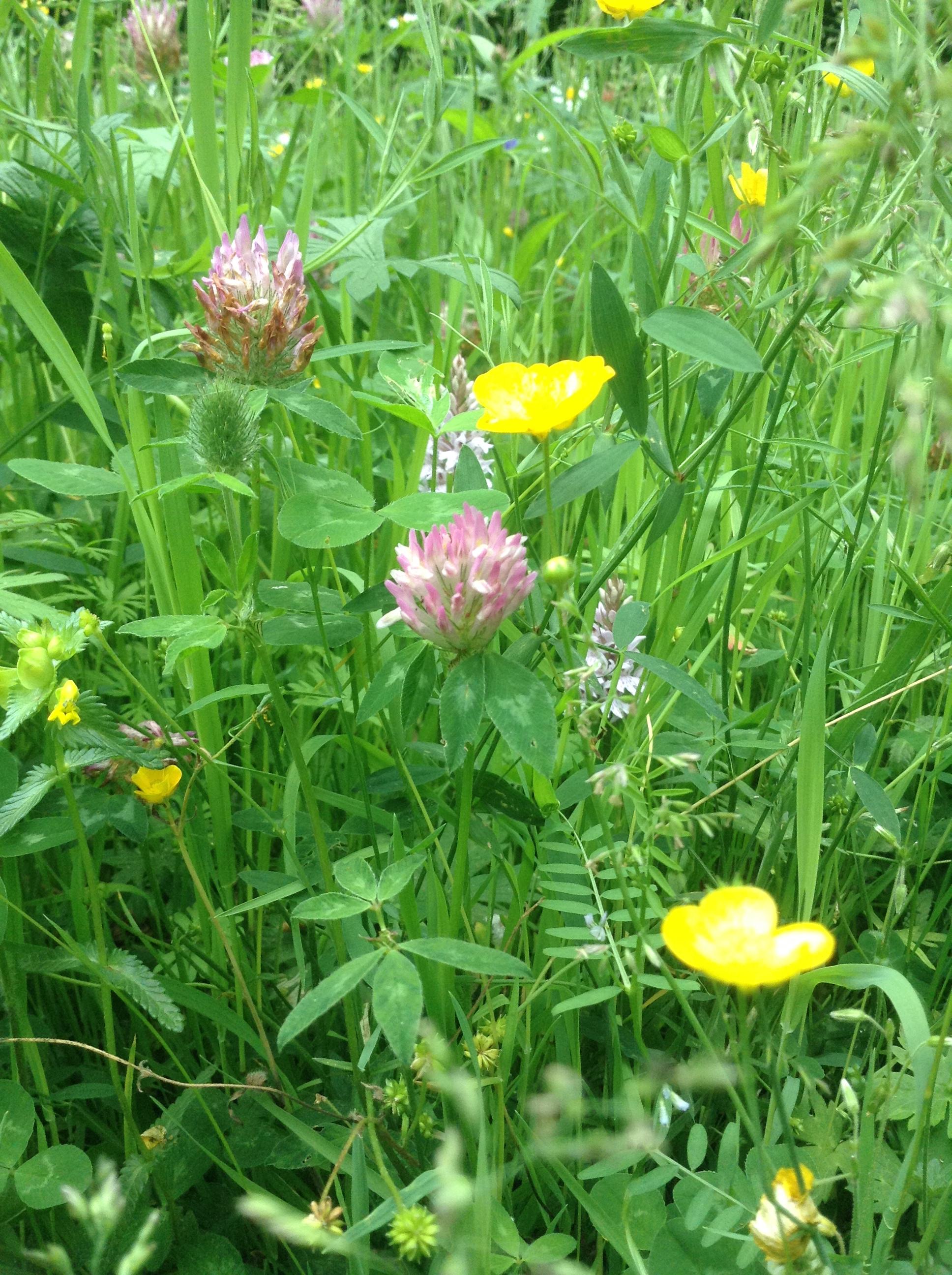 Meadow (6)